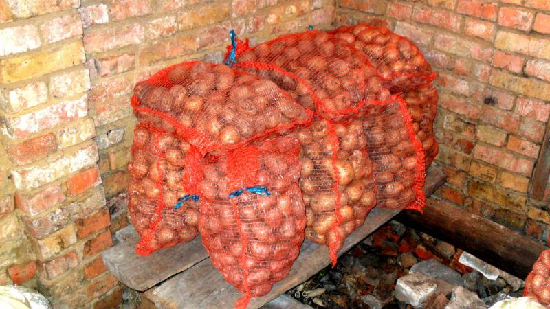 Плесень на картошке в погребе — Сад и огород