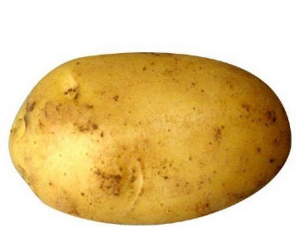 Сорт картофеля лина характеристика