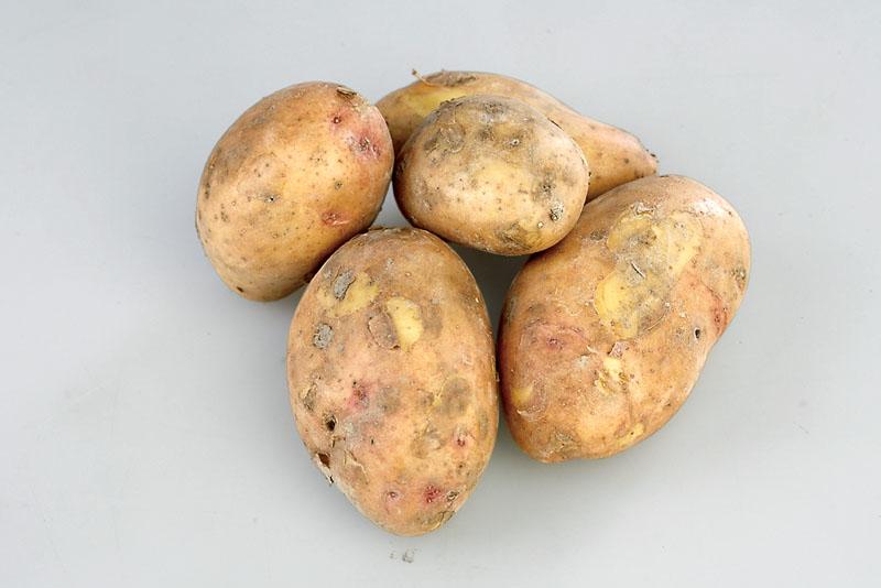 сорта картофеля фото описание очень разваристый первых открыты двери