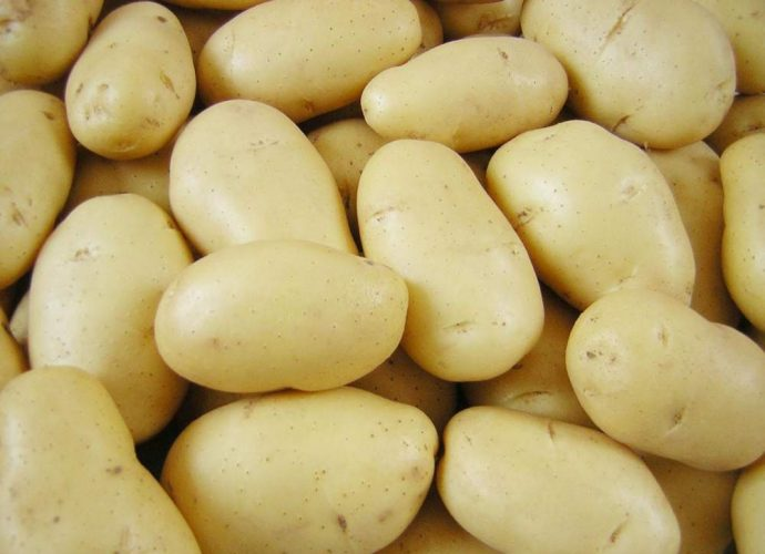Красный картофель с желтой мякотью сорта