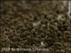 Плесень (грибок). Описание, виды и причины появления плесени. Как избавиться от плесени?