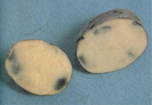 Почему синеет картошка после варки? Почему темнеет очищенный картофель