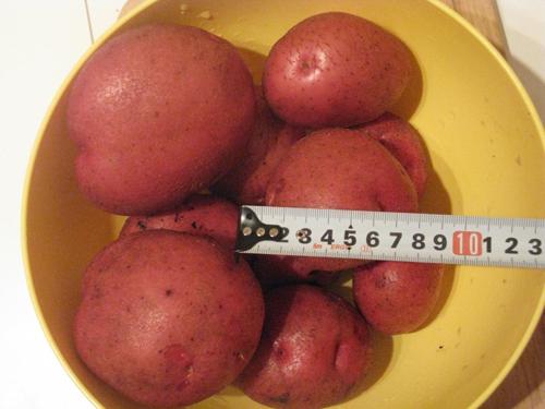 Сорт картофеля «Кураж» – описание и фото
