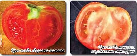 Фитоплазмы винограда