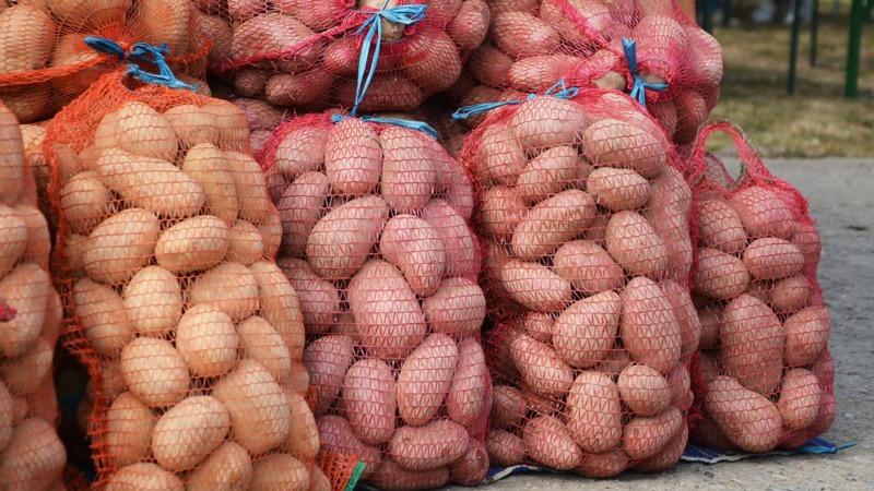 Урожайность с 1 га картофеля и как повысить урожайность картошки