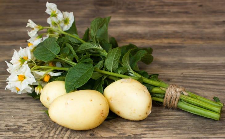 Боится ли картофель заморозков