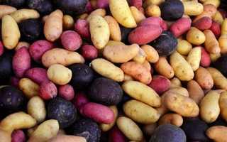 Сорт картофеля «Купец» – описание и фото