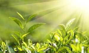 Семейство Лилейных растений: список, описание, роды и виды