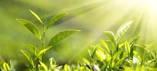 🌒 Посевной календарь на 26.01.2020 года – садоводам и огородникам