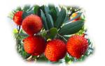 Земляничное дерево — полезные свойства, описание