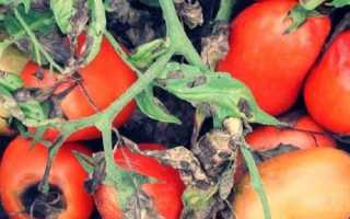 Макроспориоз картофеля: признаки, методы борьбы, профилактика