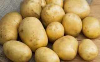 Сорт картофеля «Сифра» – описание и фото
