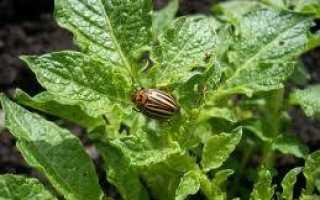 Препарат «Наповал» от колорадских жуков на картофеле