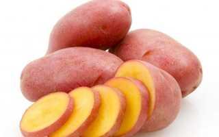 Сорт картофеля «Родриго (Родрига)» – описание и фото