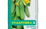 Сударушка для огурцов — отзывы, описание