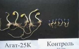 Препарат Агат-25К для картофеля: инструкция и дозировка
