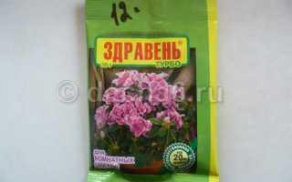 Здравень комнатные цветы турбо  — отзывы, описание