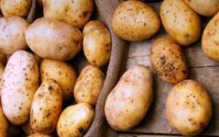 Инта-вир от колорадского жука на картофеле: дозировка