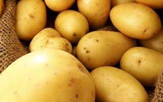 Сорт картофеля «Удача» – описание и фото