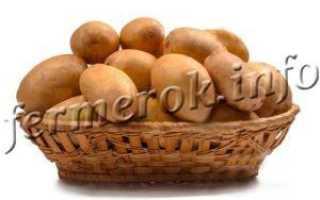 Сорт картофеля Тулеевский – описание и фото