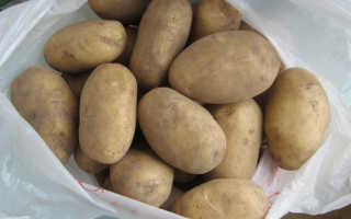 Сорт картофеля «Колобок» – описание и фото