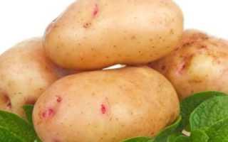 Сорт картофеля «Любимец» – описание и фото