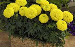 АВА для однолетних садовых и балкон.цветов — отзывы, описание