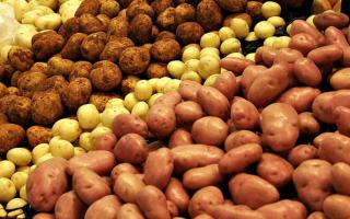 Сорт картофеля «Волжанин» – описание и фото