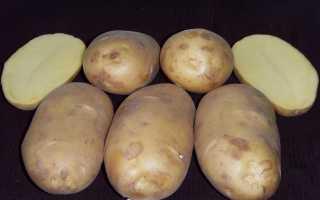 Сорт картофеля «Чароит» – описание и фото