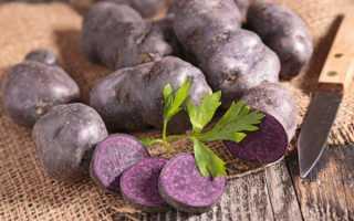 Сорт картофеля «Аметист» – описание и фото