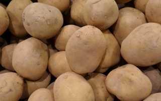 Сорт картофеля «Бронницкий» – описание и фото