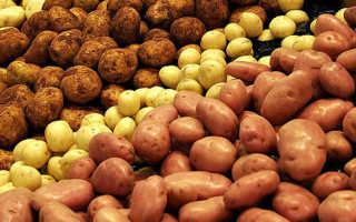 Сорт картофеля «Фаворит» – описание и фото