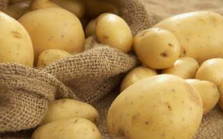 Сорт картофеля «Евростарч (Eurostarch)» – описание и фото