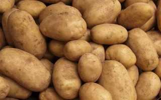 Сорт картофеля «Петровский» – описание и фото