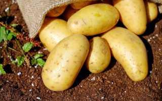 Подготовка и хранение семенного картофеля в погребе и дома