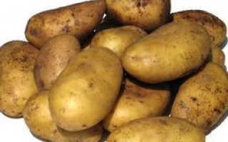 Сорта картофеля для Средневолжского региона: список