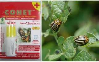 Средство Сонет от колорадского жука для картофеля: инструкция