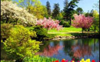ЖКУ Флорика Для комнатных растений — отзывы, описание