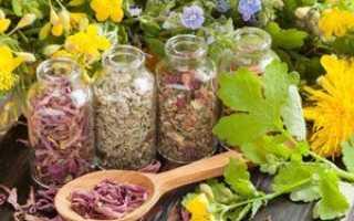 Почечный чай — полезные свойства, описание