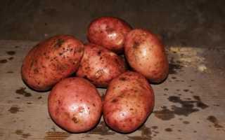 Сорт картофеля «Журавинка» – описание и фото