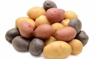 Сорта картофеля, устойчивые к колорадскому жуку – список