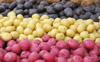 Белые и желтые сорта картофеля: названия, плюсы и минусы