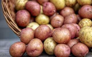 Лучшие сидераты для картофеля и правила их посадки