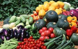 Немабакт для картофеля от колорадского жука: инструкция