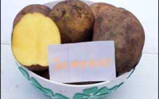 Сорт картофеля «Бафана» – описание и фото
