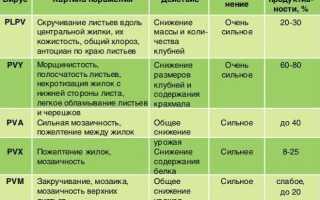 Готика клубней картофеля (веретеновидность): симптомы, борьба