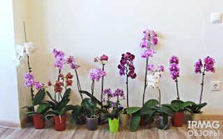 РОКОN для орхидей — отзывы, описание