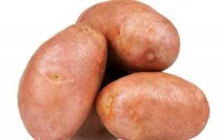 Сорт картофеля «Банба (Banba)» – описание и фото