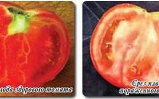 Фитоплазмы растений, как лечить