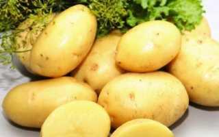 Сорт картофеля «Лорх» – описание и фото